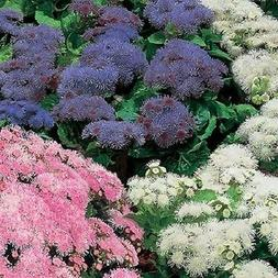 50 ageratum rare hawaii mix